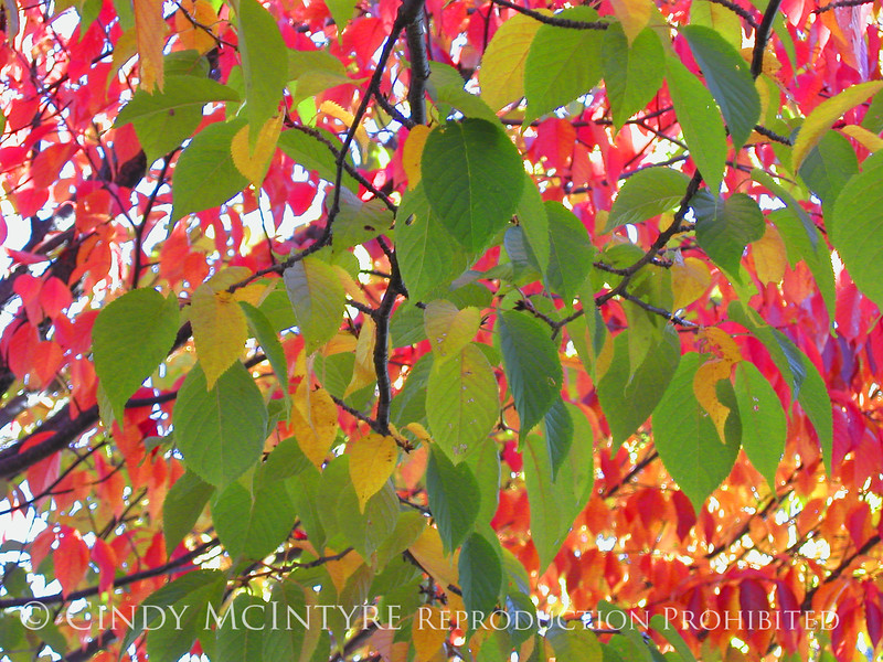 Autumn Leaves Green 13x19 copy