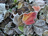 Frosty leaves, Waldoboro ME (4)