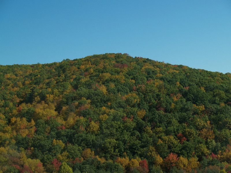 We took a trip to the Montour Preserve & I had to shoot from the car window.