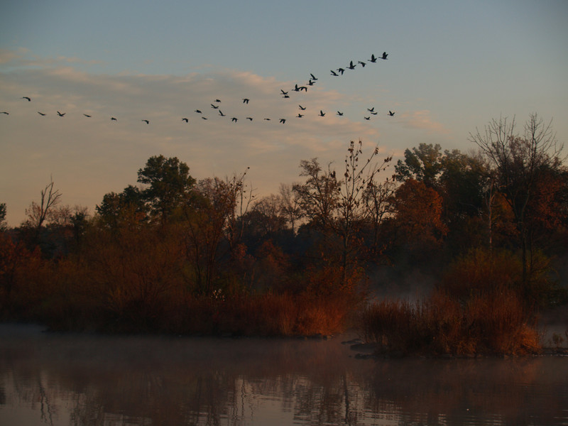 the geese were on the move that morning