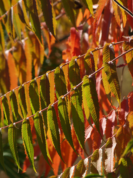 again, like prayer flags in the breeze