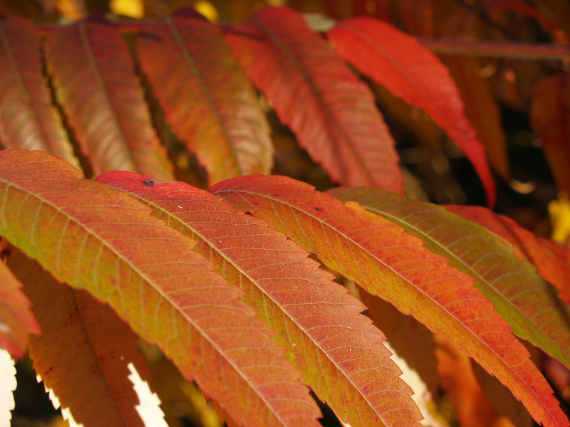 don't worry, there's more sumac a few pages forward!
