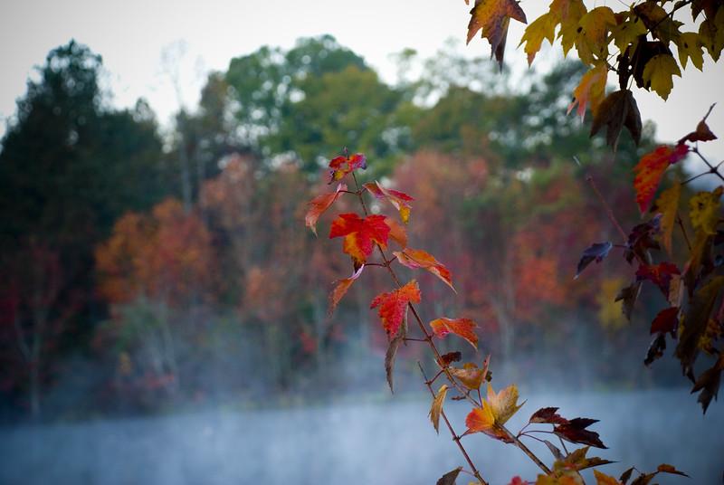 Autumn2753.jpg