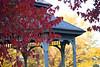 Autumn2817.jpg