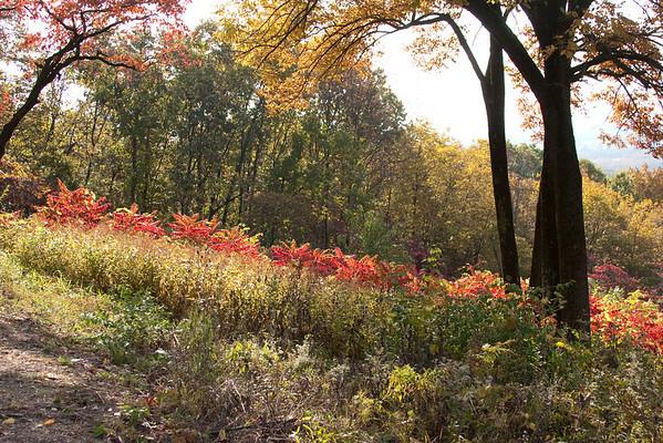 Autumn Ramblings 2009