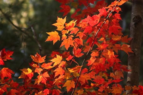Autumn Trivia