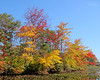 Autumn foliage at Mill Pond,Wantagh,NY.