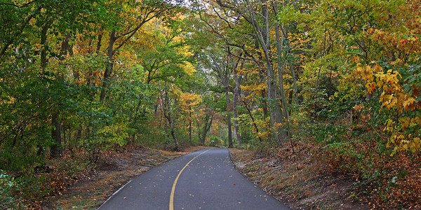 Caumsett State Park fall foliage.