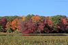 Mill Pond Fall foliage in Wantagh,NY.
