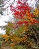 Clark Gardens Fall foliage. Japanese Maples.