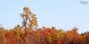 Fall foliage at Shu Swamp.