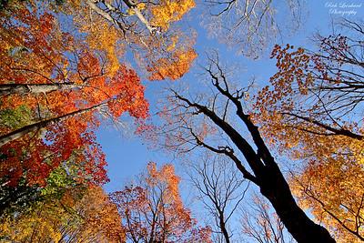 Fall foliage at Nassau County Museum Of Art.