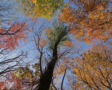 Muttontown Preserve fall foliage 2013
