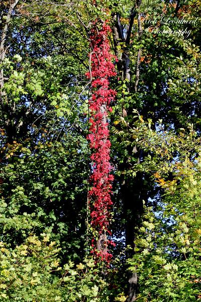 Fall foliage at The Nassau County Museum Of Art.