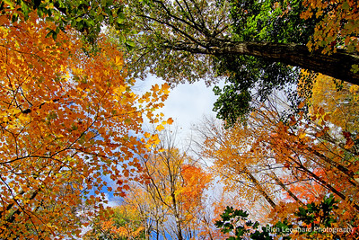 Autumn foliage at The Nassau County Museum Of Art. In Roslyn Harbor, NY.
