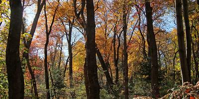 Muttontown Preserve fall foliage