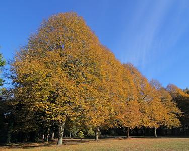Fall foliage at Chelsy Center