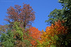 Autumn foliage by Cedarmere,Roslyn Harbor,NY.