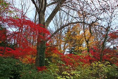 Bailey Arboretum fall foliage