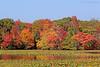Mill Pond Autumn foliage in Wantagh,NY.