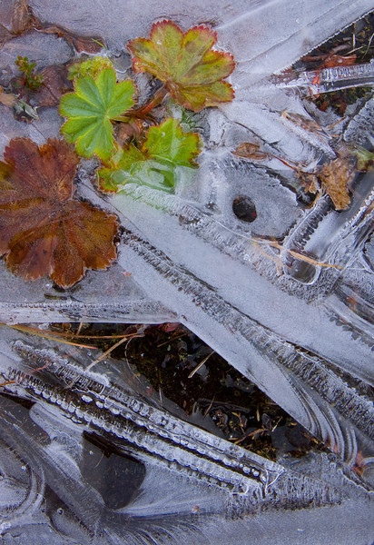 Frozen still life