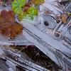 Frozen still life