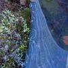 2008-10-08-11-21_4484_K10D