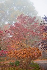 Asheville Fall029