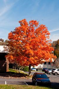 Asheville Fall016