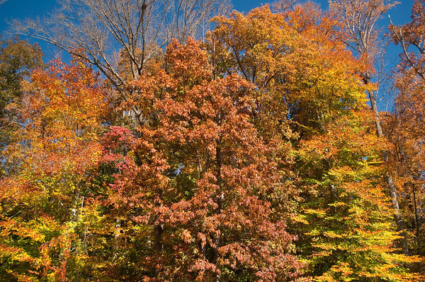 Asheville Fall030