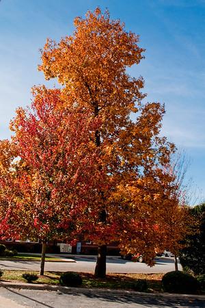 Asheville Fall007