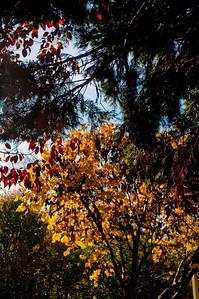 Asheville Fall005