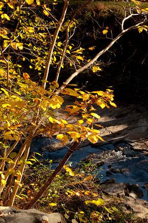 Asheville Fall038