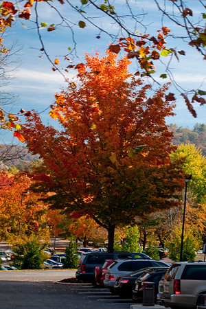 Asheville Fall008