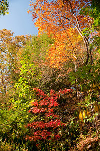 Asheville Fall036