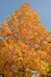 Asheville Fall011
