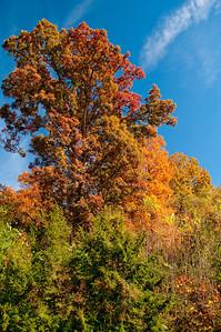 Asheville Fall014
