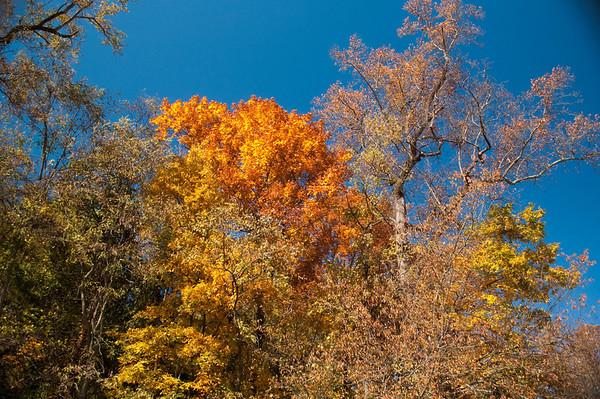 Asheville Fall031