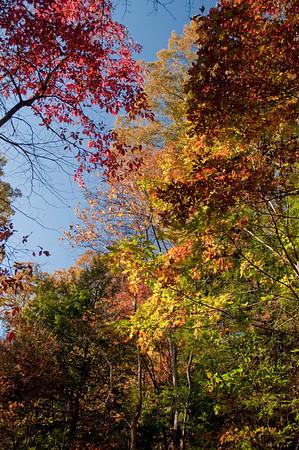 Asheville Fall035