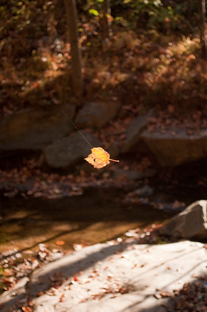 Asheville Fall039