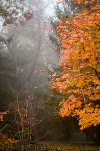 Asheville Fall026