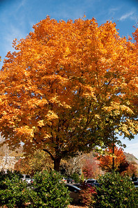Asheville Fall017