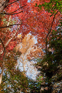 Asheville Fall042