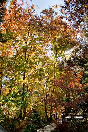 Asheville Fall032