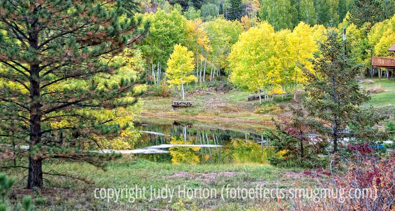 Aspen in autumn in Colorado