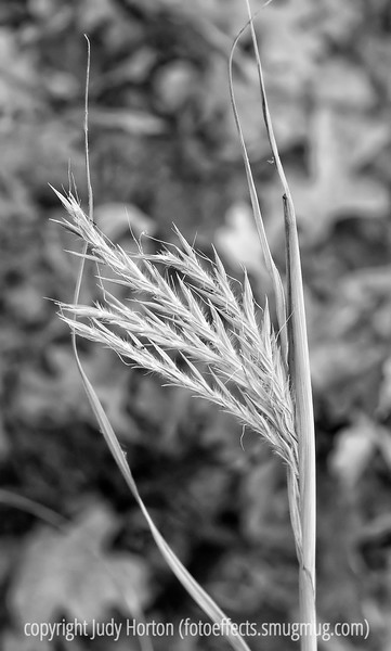 A grass seedhead; really must be viewed in the largest sizes