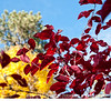Autumn leaves; best viewed in the larger sizes