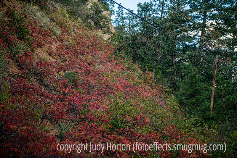 Sumac in Cheyenne Canyon