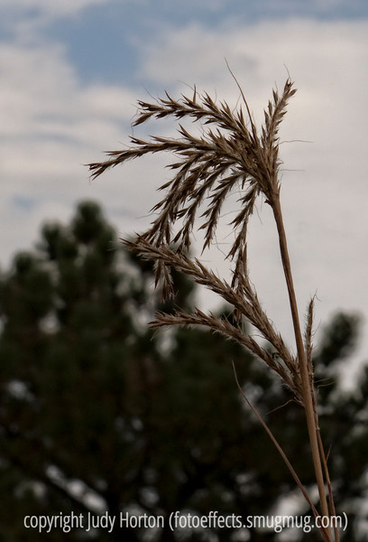Grass seedhead at Castlewood State Park; needs to be viewed in the largest size