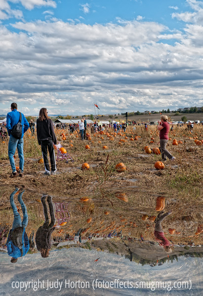 Pumpkin festival at Chatfield Park in Denver; best viewed in the largest sizes